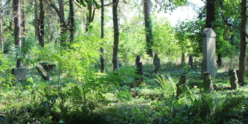 Friedhof Pinnow Weststernberg Neumark Dilibra Ahnenforschung Blog 945x473 - Weststernberg, Pinnow, Neumark Tour 2018, Neumark, Friedhof, Codogny, Böhme