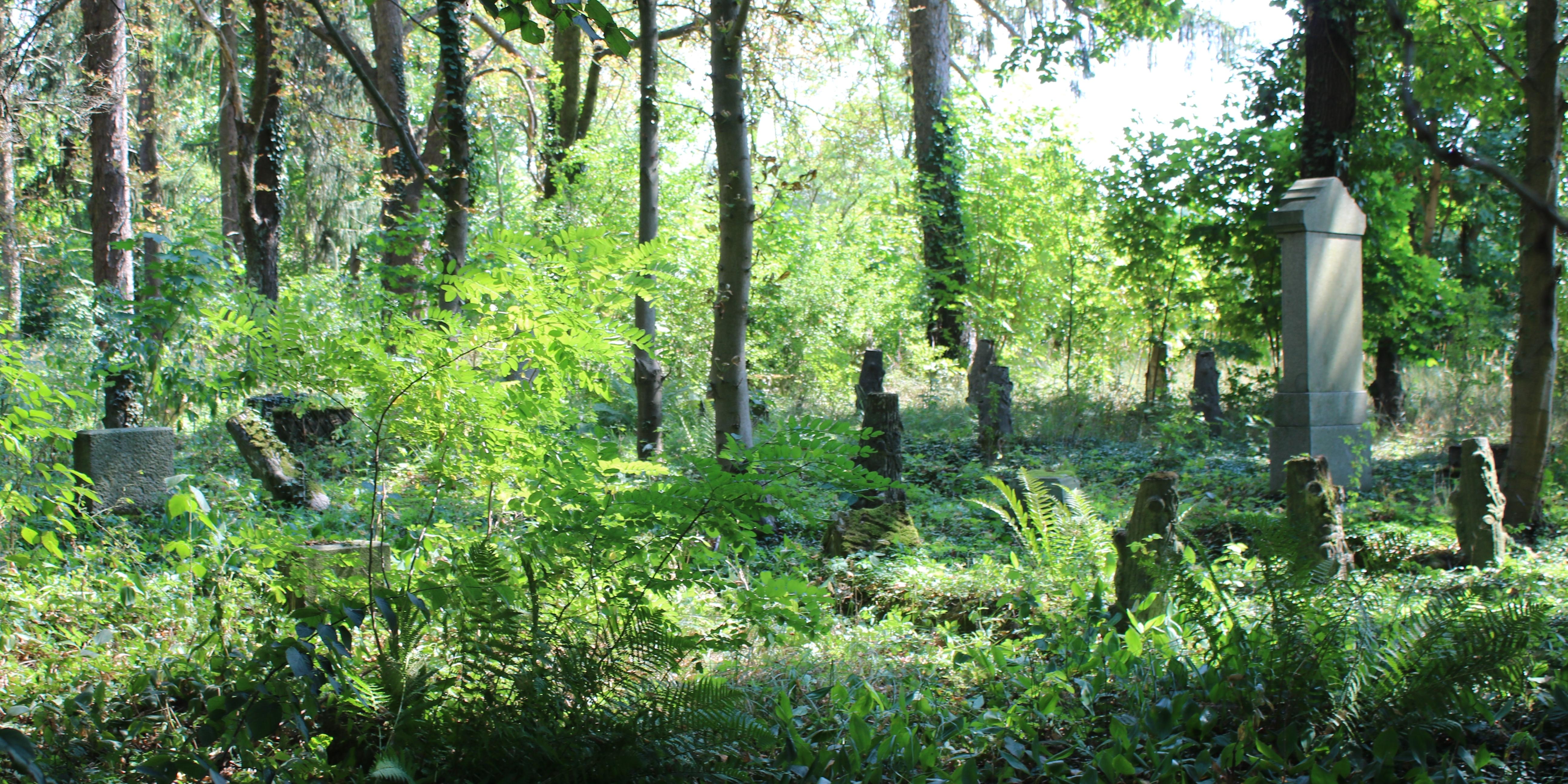 Friedhof Pinnow Weststernberg Neumark Dilibra Ahnenforschung Blog - Weststernberg, Pinnow, Neumark Tour 2018, Neumark, Friedhof, Codogny, Böhme